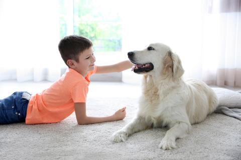 Boy lies on living room floor while petting his golden retriever.